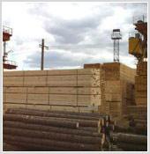 Разработан бизнес-план лесозаготовительного производства