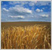 Выполнен анализ рынка пестицидов (средств защиты растений)