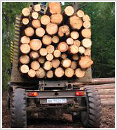 """Бизнес-план """"Организация лесозаготовительного производства со стадией первичной распиловки"""""""