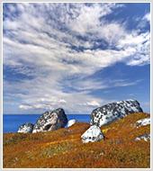 """Фотографии природы Белого моря и Алтая в фотобанке """"Текарт"""""""