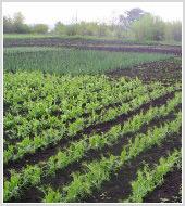 Маркетинговое исследование рынка садовой техники (малой сельхозтехники)