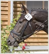 Фотосъемка спортивной лошади для Argo Rus