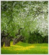 """Фотографии весенних парков и цветов в фотобанке """"Текарт"""""""