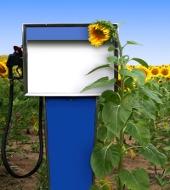 Маркетинговое исследование рынка биотоплива (вер.5)