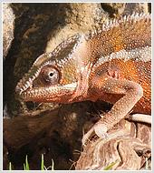 """Фотосъемка  экзотических животных в террариумах для компании  """"Велесанс"""""""